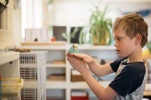 Child holding budgerigar.