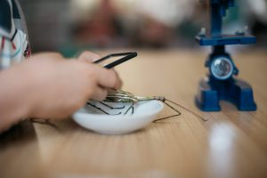 Child examining insect with a magnifying glass.