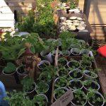 Plant stall.