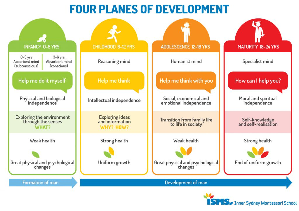 Four Planes of Development from birth to 24.